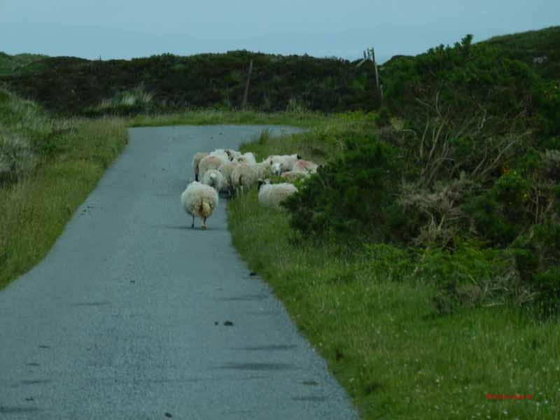 oder wenn Schafe die Straße blockieren