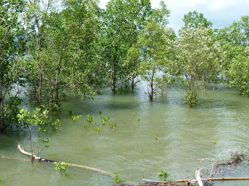 Wie im Mangrovenwald