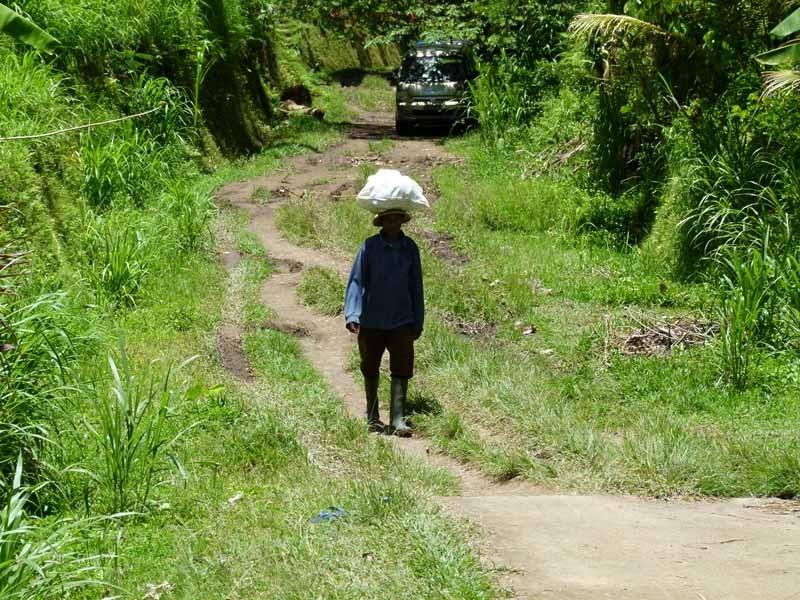 Wir erreichen das Reisfeld