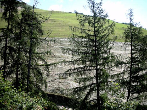 duftendes Heu auf den Bergwiesen