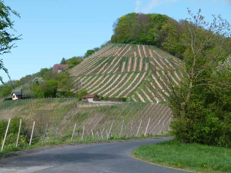 Der Stollberg, Frankens höchster Weinberg