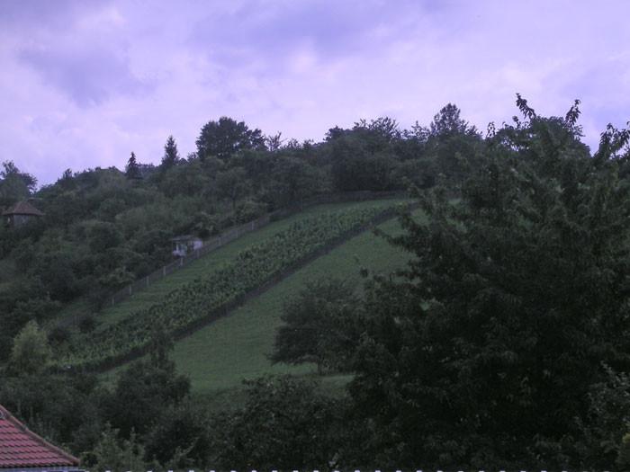 Hier wächst Saale-Unstrut-Wein