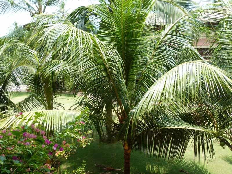 Die Palmen wachsen direkt an unserem Balkon