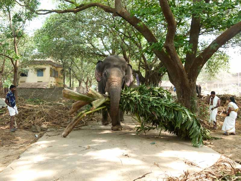 Aus dem Weg - Elefant mit Futter