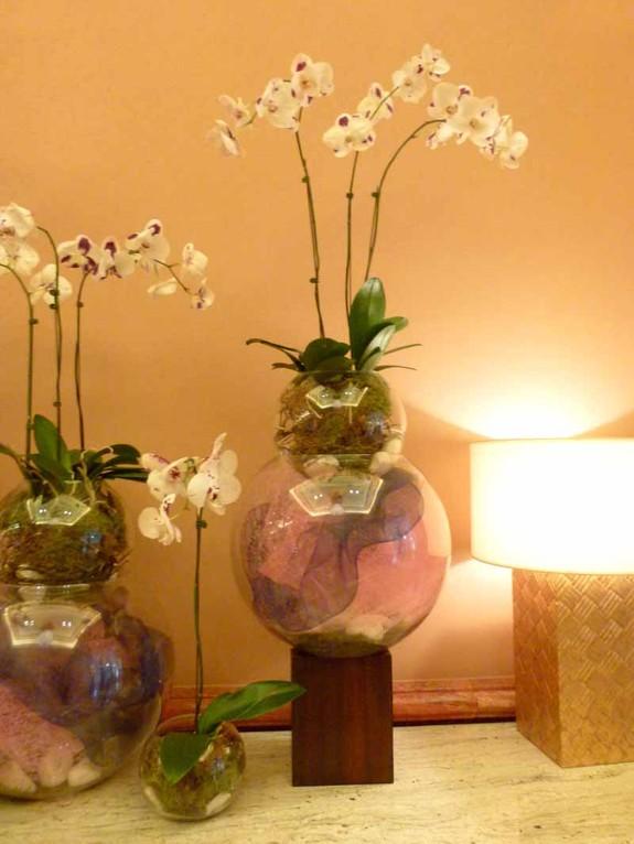 Orchideen an jeder Ecke