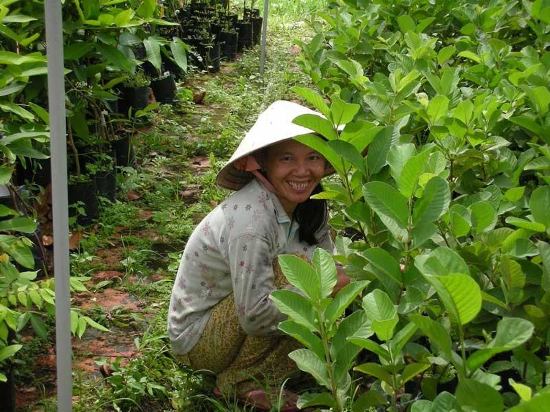 Sie arbeitet auf einer Obstplantage