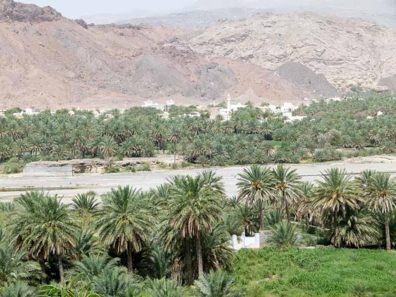 Neben dem Wadi die Bepflanzungen