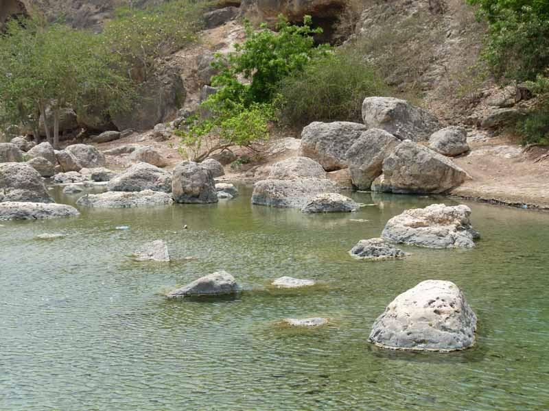 Im Wasser tummeln sich Fische