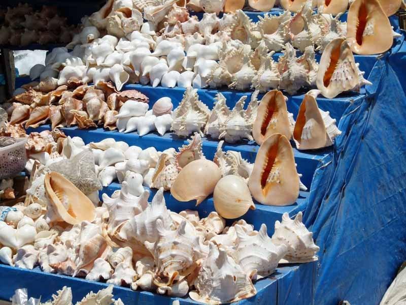 Jede Menge Muschelstände am Strand