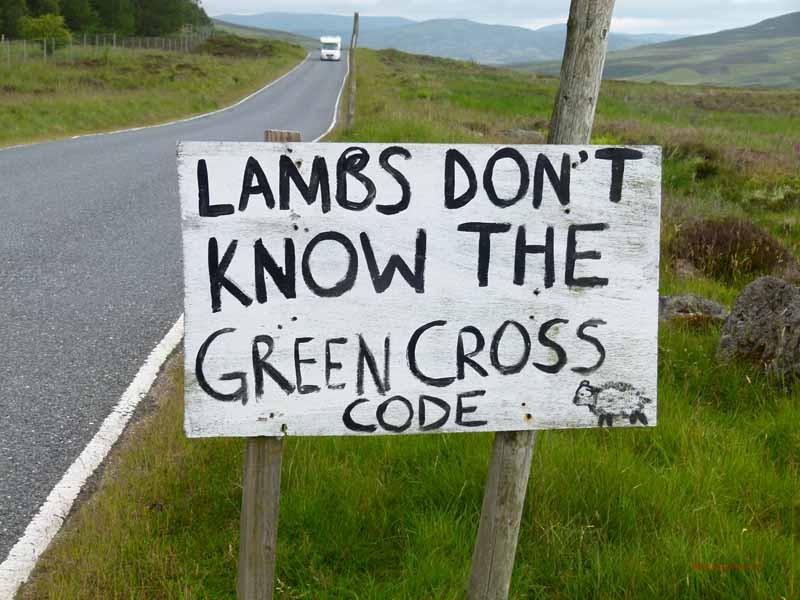In der Tat - Schafe können (noch) nicht lesen