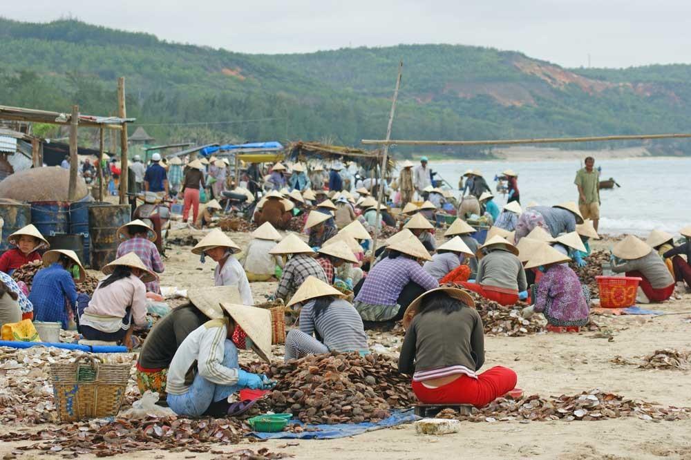 Hunderte pulen Muscheln aus