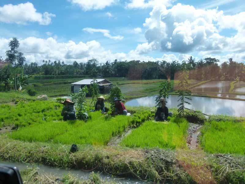Reisfeld unterwegs