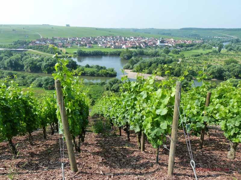 Blick von der Vogelsburg hinunter nach Nordheim
