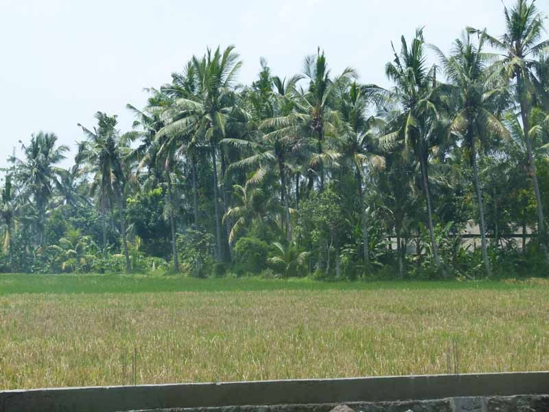Unterwegs nach Ubud