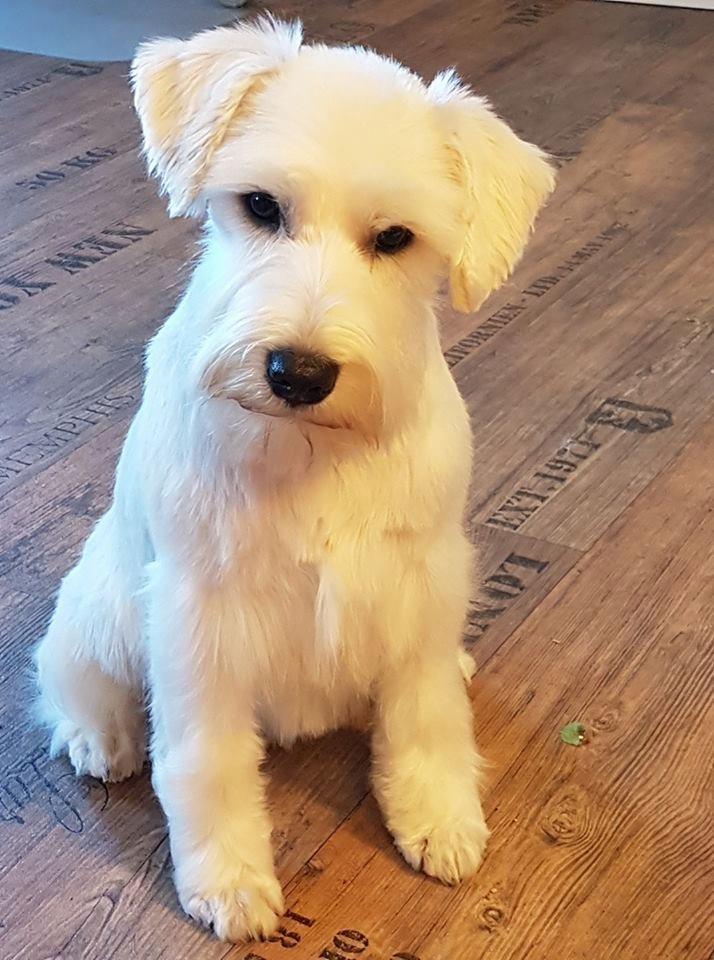 Uschi mit 5 Monaten
