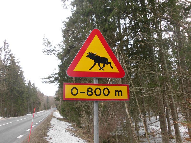 Südschweden - das Eldorado für Elche.