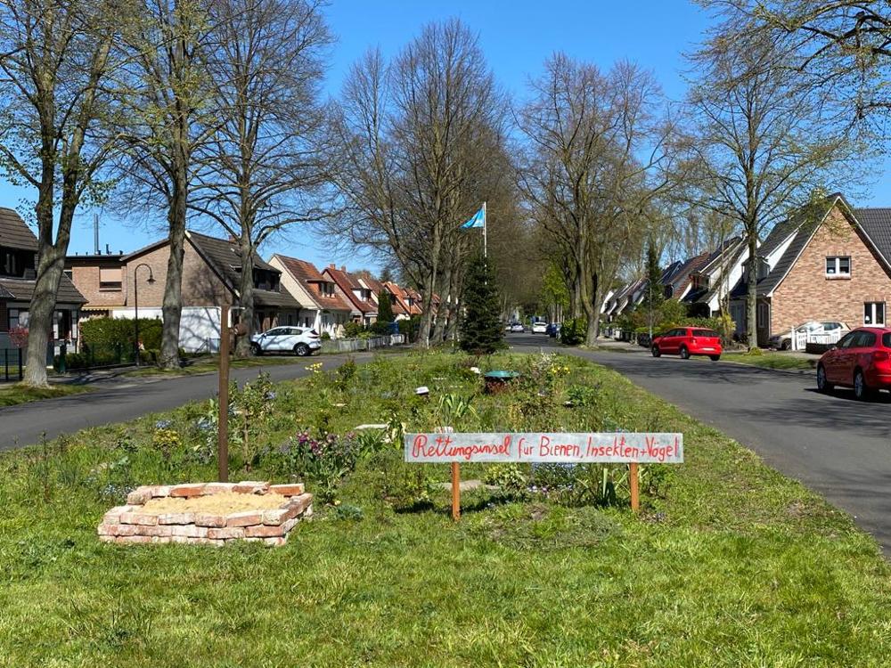 Auf der Verkehrsinsel an der Bruchhauser Straße in Kattenturm blüht des jetzt (Foto: 04-2020, Jens Schmidt)