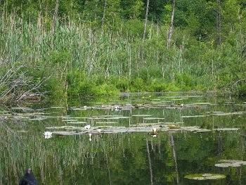 Teich in der Nähe