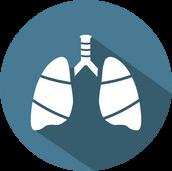 Le Poumon (Fèi 肺)