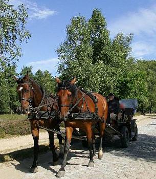 Bild: Kutschfahrten vom Garbers-Hof in dieLüneburger Heide