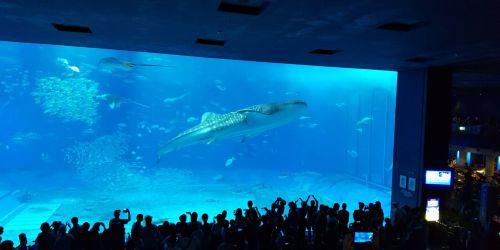美ら海水族館 沖縄(関東工場)