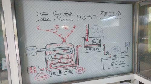 大分県地熱利用の熱帯魚(九州工場)