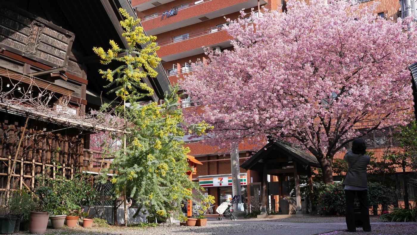 神社裏門側から撮影したもの。