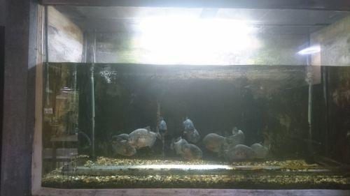 大分県熱帯魚(九州工場)