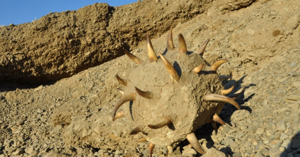''Immunity'' Jantsankhorol Erdenebayar - corna di mucca e colla di pietra - 2015