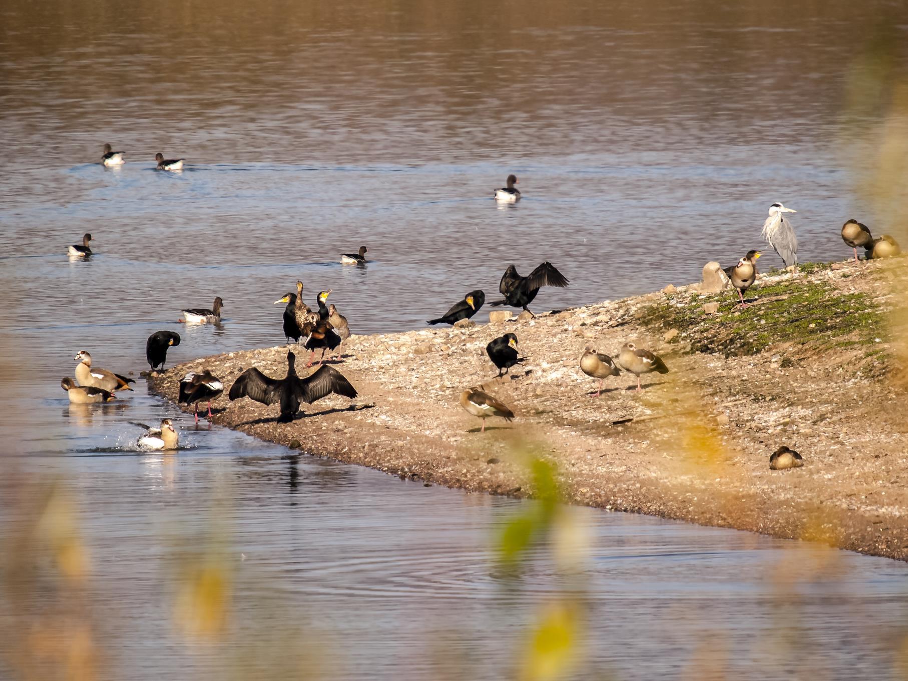 Die verschiedenen Wasservögel lassen sich gut mit einem Fernglas beobachten.