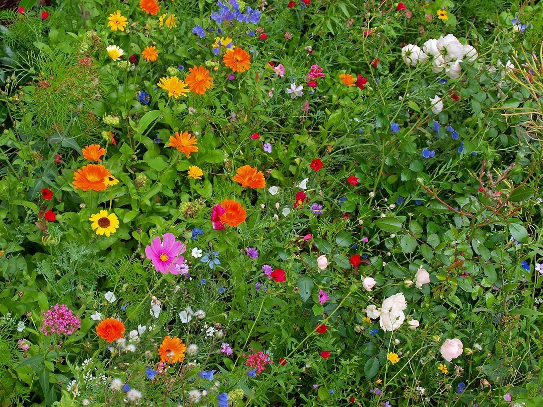 Bunte Blumenpracht für Hautflügler. - Foto: Kathy Büscher