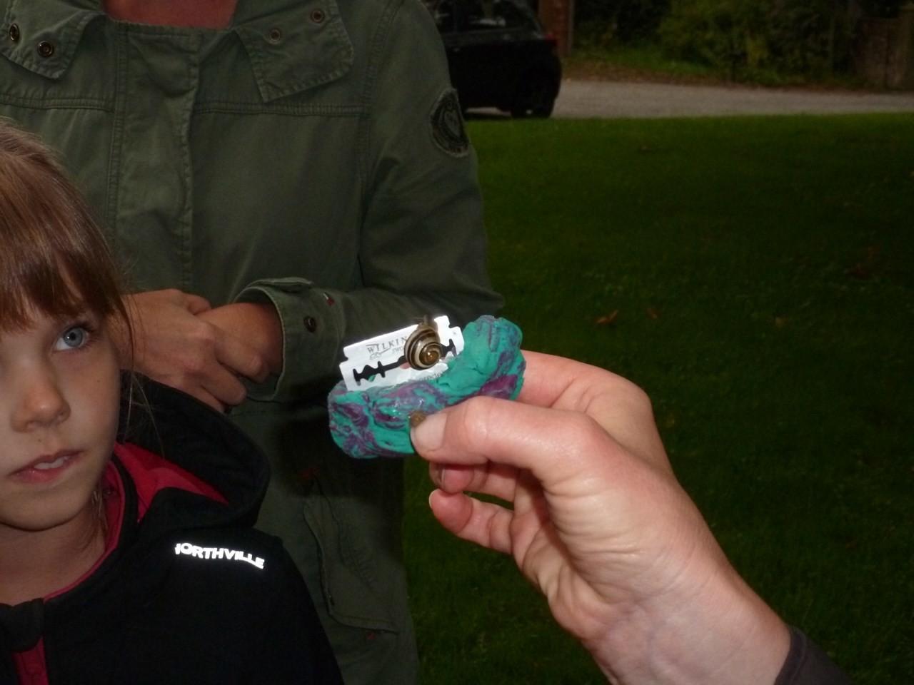 Schnecken können auf Rasiermessern kriechen, ohne sich zu verletzen. - Foto: Maren Matzeik