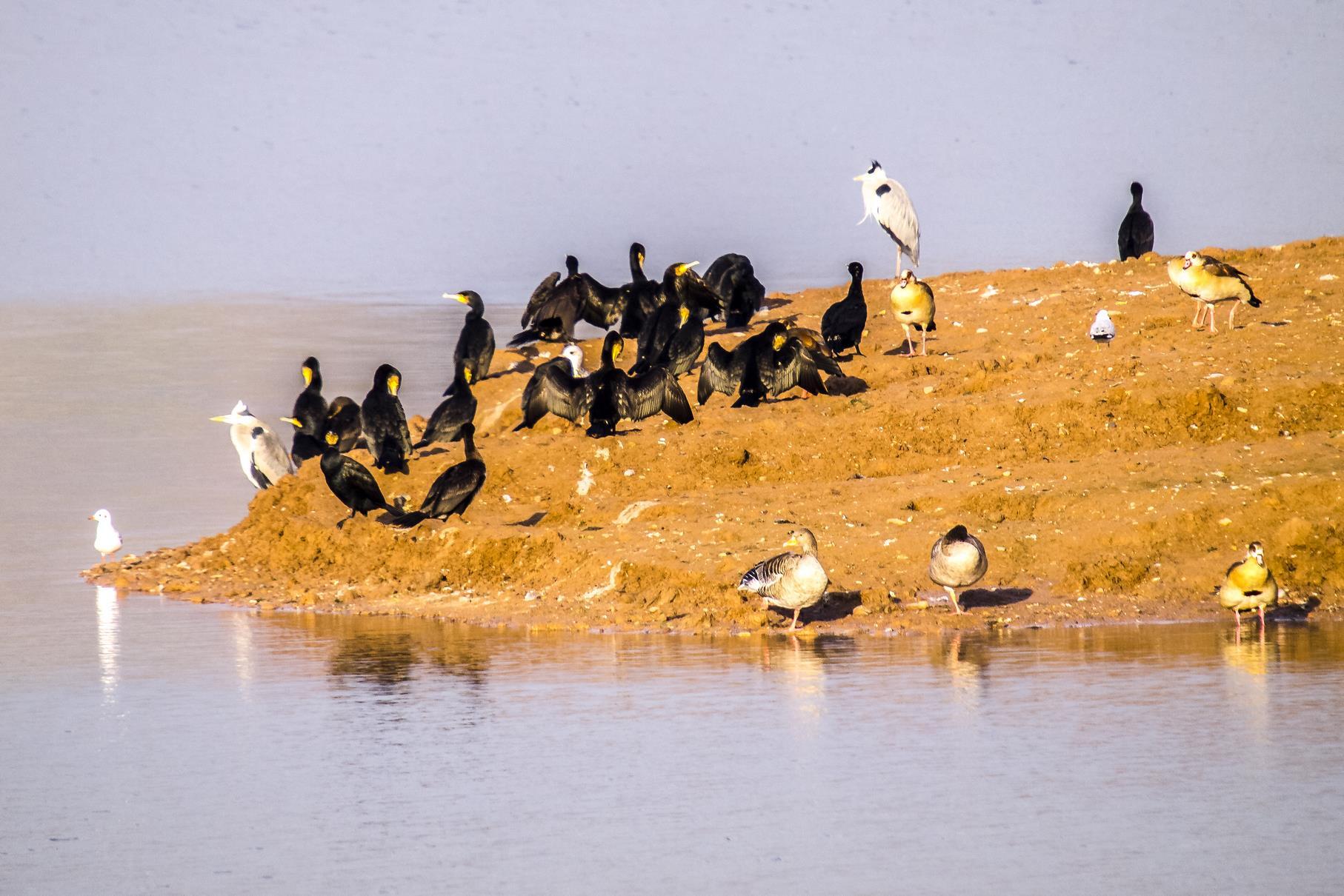 Verschiedene Wasservögel sitzen am Fuß der flachen Insel.