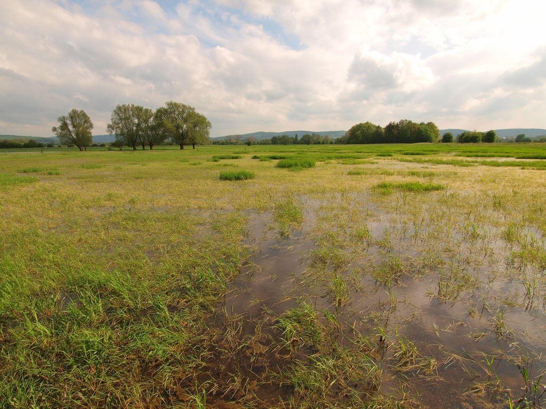Feuchtwiesen, die im Überschwemmungsgebiet liegen. - Foto: Kathy Büscher