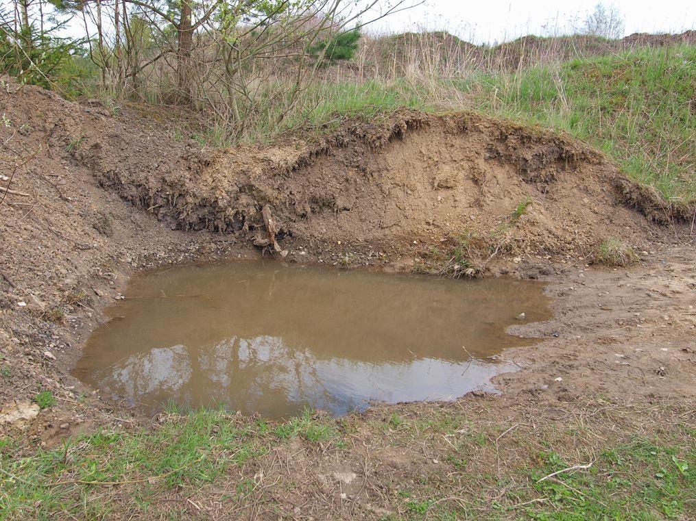 Ein frisch angelegter Teich. - Foto: Kathy Büscher