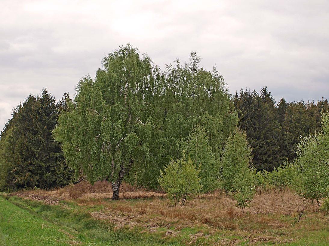 Typisches Landschaftsbild in der Umgebung von Gut Sunder. - Foto: Kathy Büscher