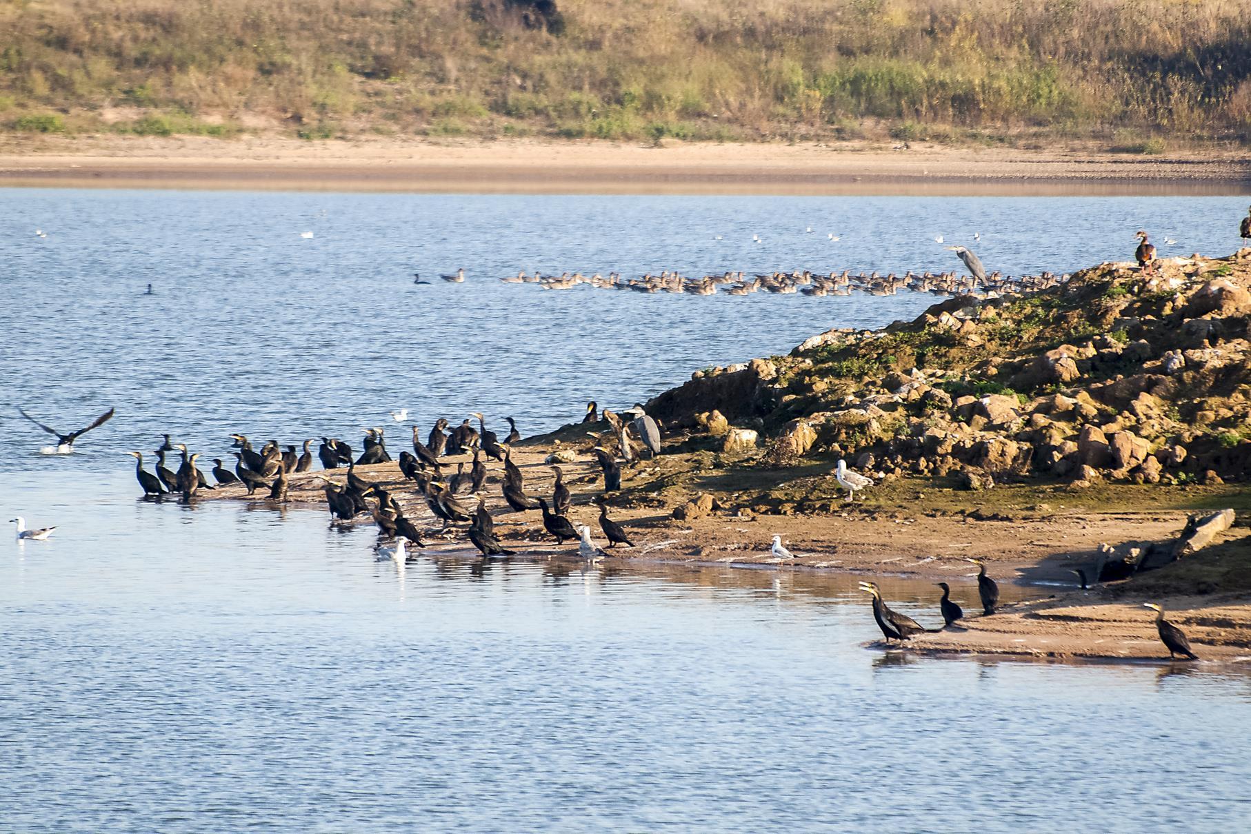 Aus sicherer Entfernung kann man allerlei Wasservögel beobachten.