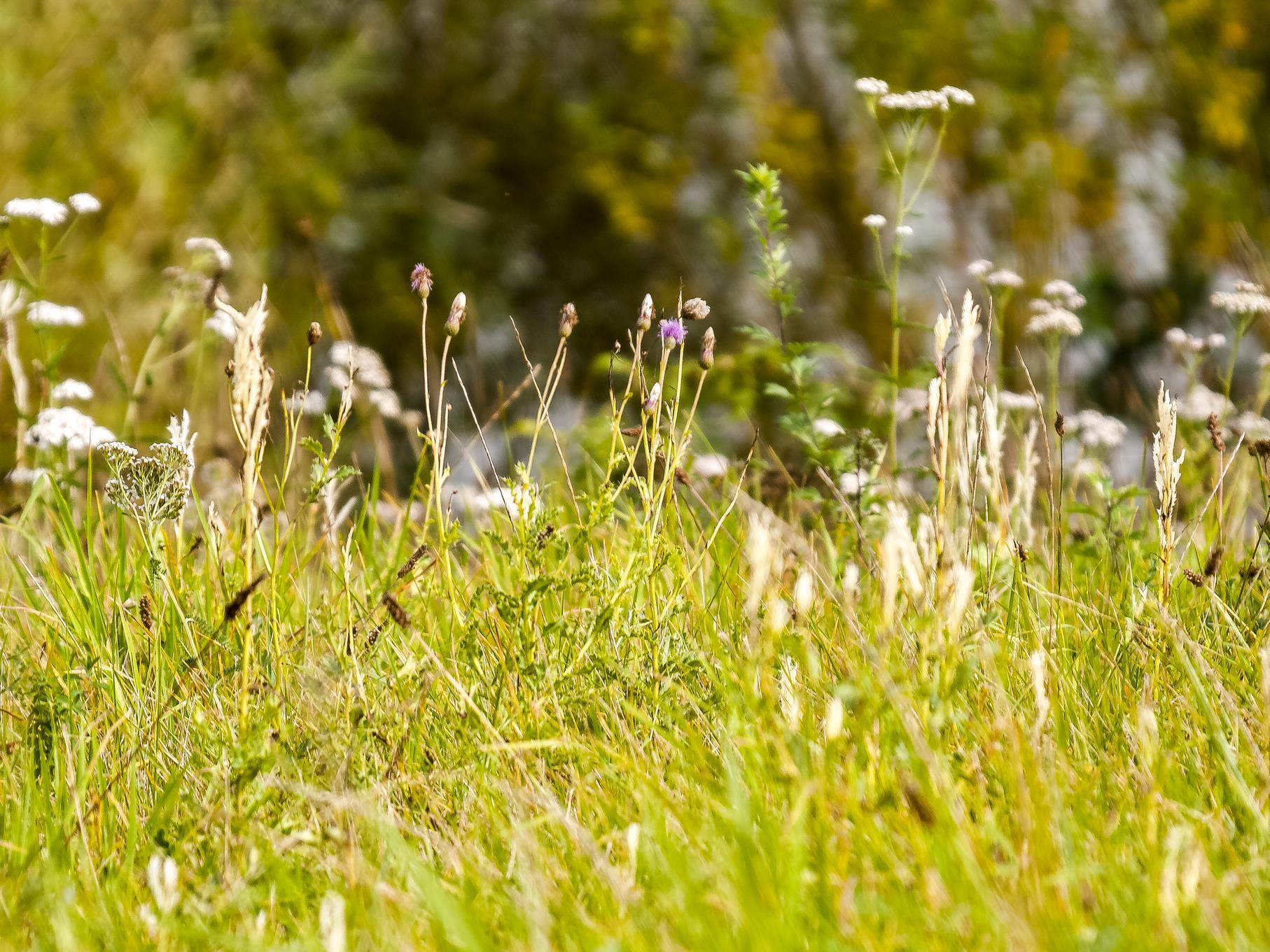 Bunte Pflanzenvielfalt im Naturschutzgebiet.