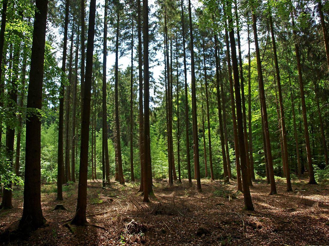 Das angrenzende Waldstück. - Foto: Kathy Büscher