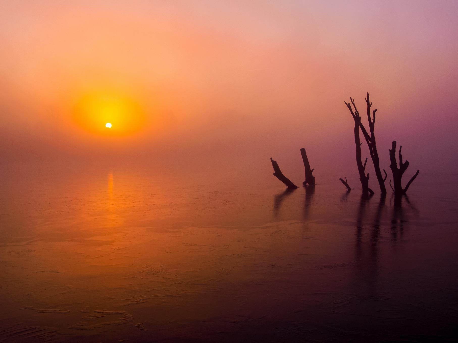 Tote Bäume im Sonnenaufgang an einem nebeligen Märzmorgen.