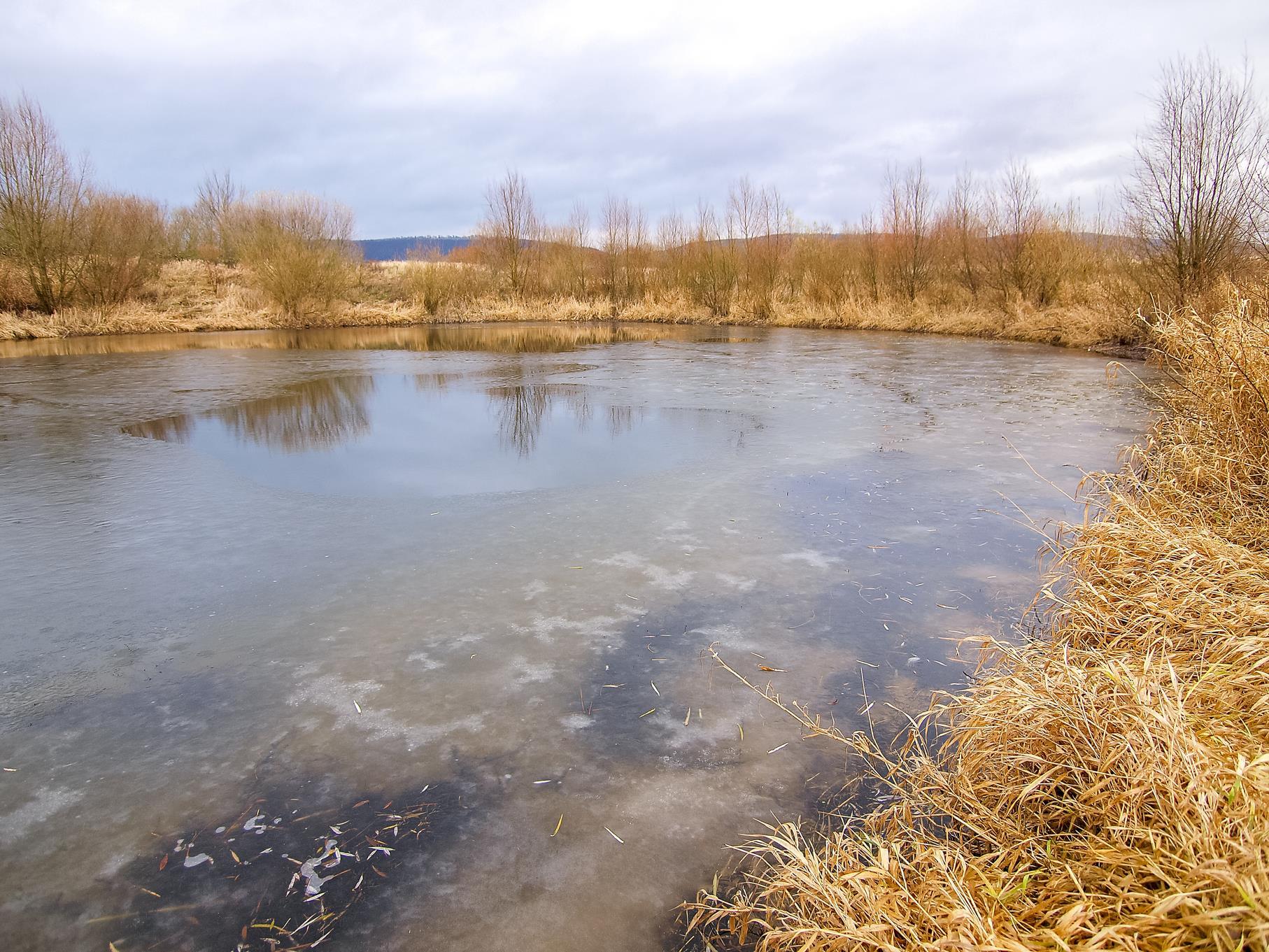 Gefrorenes Wasser in der Auenlandschaft.