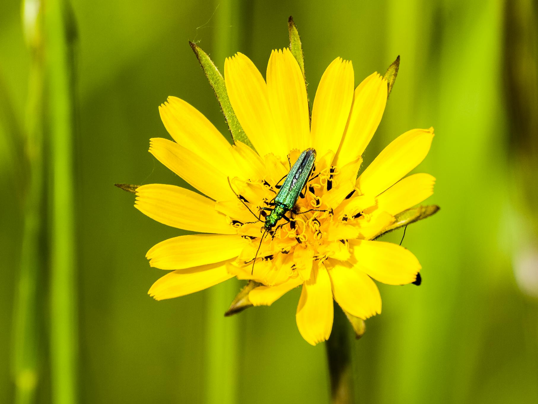 Auch Käfer gibt es im Naturschutzgebiet.