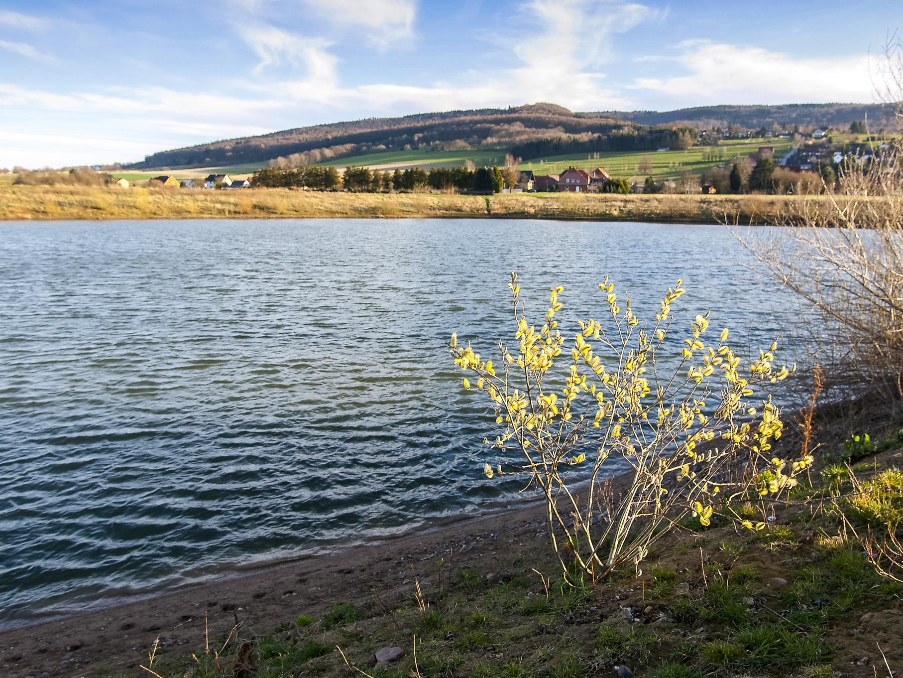 Eine einzelne kleine Weide wird von der Abendsonne am östlichen Teich angestrahlt.