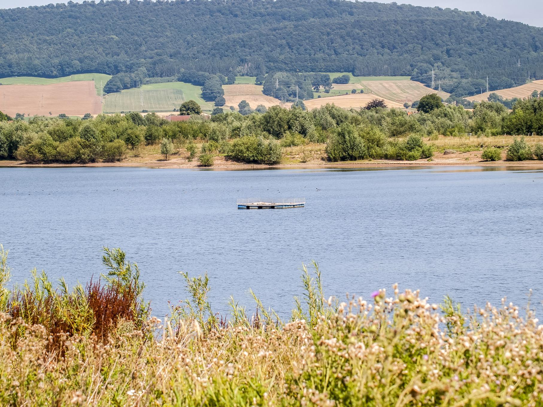 Das Flussseeschwalbenfloß auf dem westlichen Teich des Naturschutzgebietes.