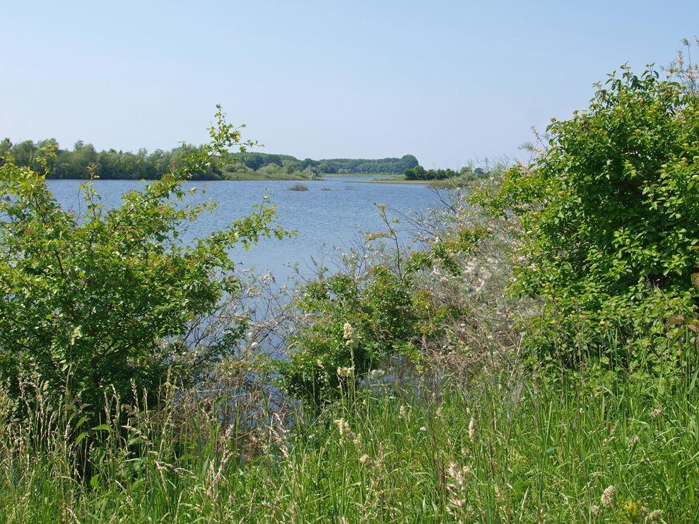 Die Wasserlandschaft. - Foto: Kathy Büscher