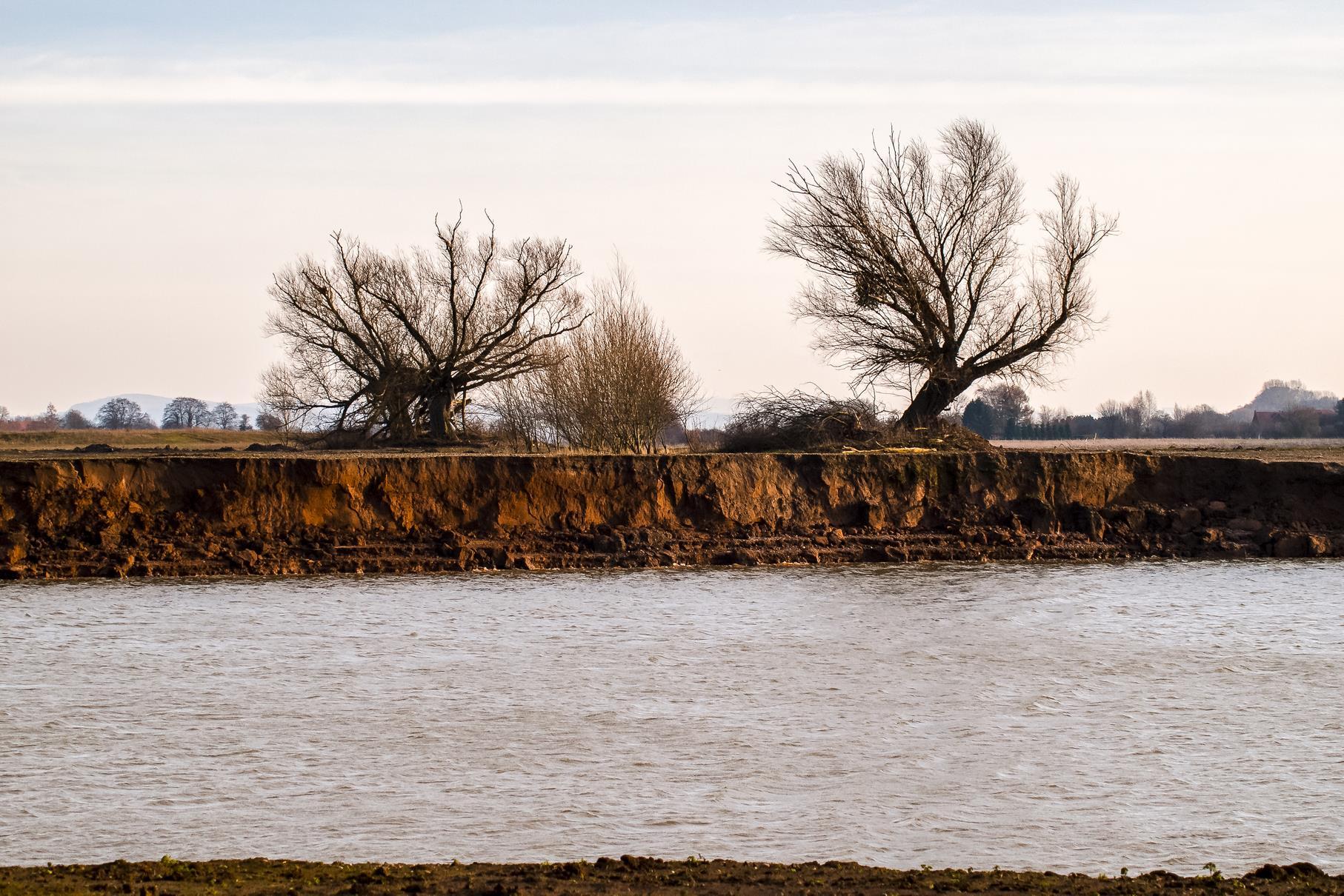 Die beiden großen Kopfweiden im westlichen Bereich mit einem Steilufer im Vordergrund, wo Uferschwalbe und Eisvogel brüten können.