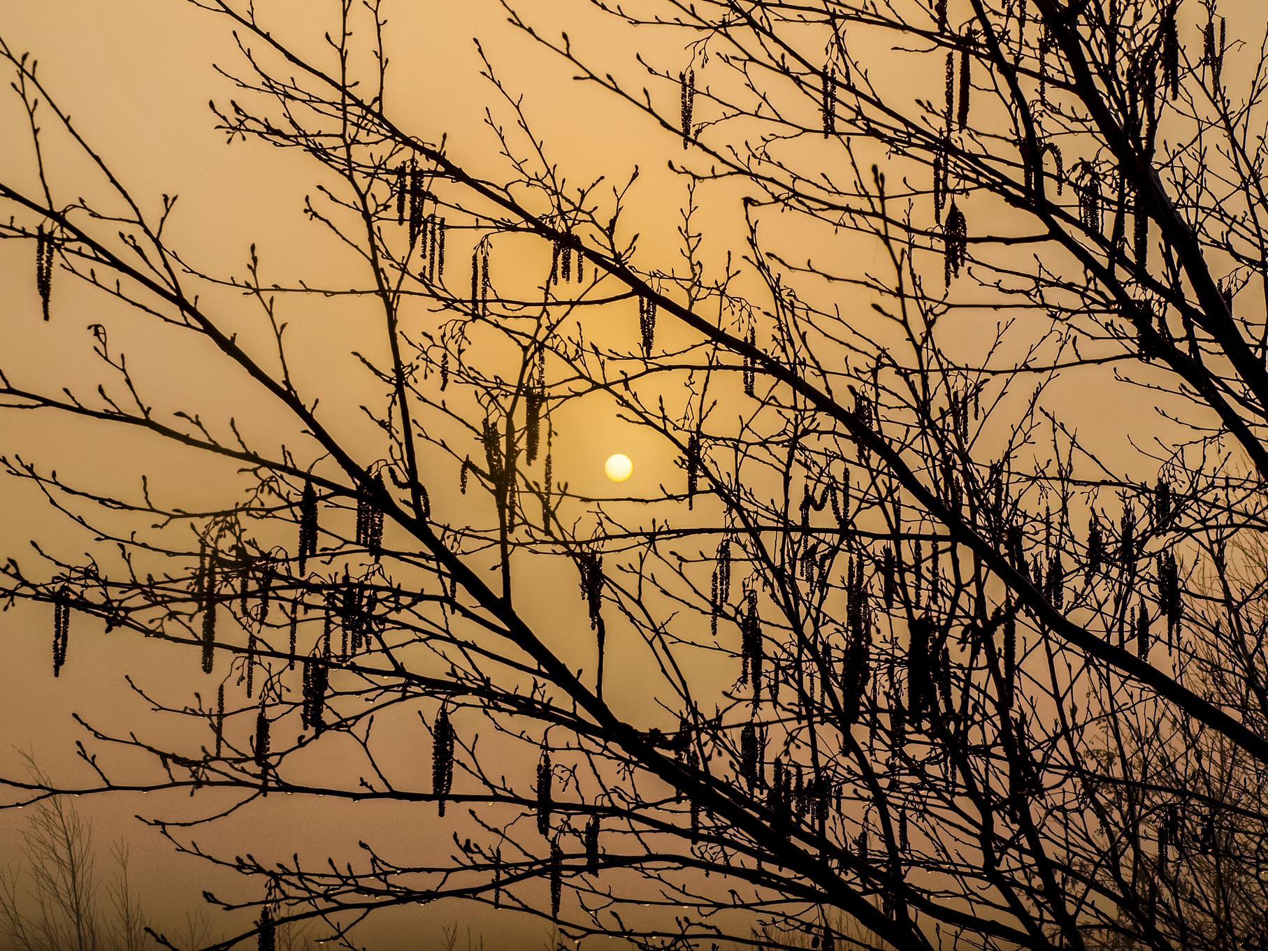 Weidenzweige in der Morgensonne.