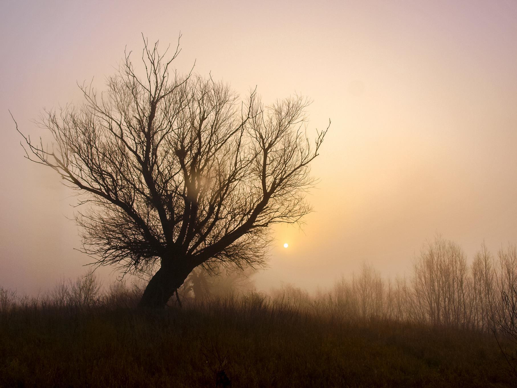 Kopfweide in der Morgensonne im März.