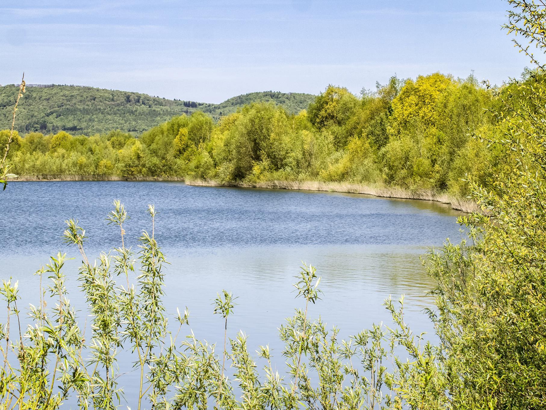 Die Uferbereiche der Kiesteiche sind im Mai grün gefärbt.