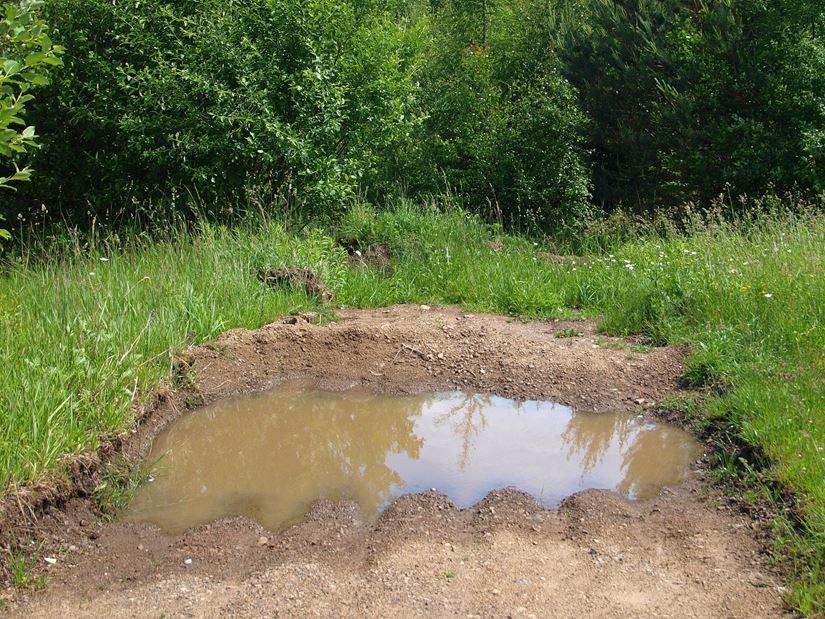 Ein neu angelegter Teich ohne Vegetation und viel Sonne, wie ihn die Unken mögen. - Foto: Kathy Büscher
